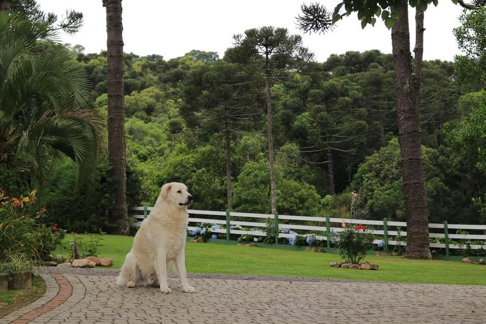 refugio monte olimpo 11 - Refúgio Monte Olimpo - 5 Motivos Para Se Hospedar No Paraíso Em Meio A Muito Verde E Cachoeiras